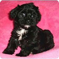 Adopt A Pet :: Josie - Mooy, AL