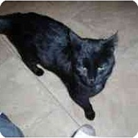 Adopt A Pet :: Portia - Hamburg, NY