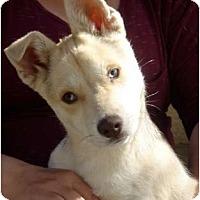Adopt A Pet :: Bones - Fresno, CA