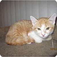 Adopt A Pet :: Eddie - Catasauqua, PA
