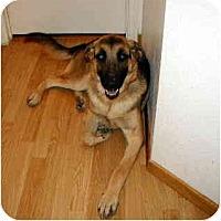 Adopt A Pet :: Roman - Scottsdale, AZ