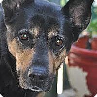 Adopt A Pet :: mamma - Saskatoon, SK