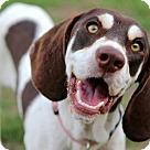 Adopt A Pet :: ANITA