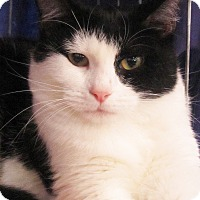 Adopt A Pet :: Shiner - Seminole, FL