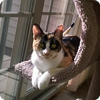 Adopt A Pet :: Jordan - Horsham, PA