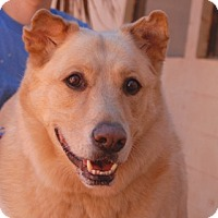 Adopt A Pet :: Paul - Las Vegas, NV
