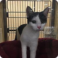 Adopt A Pet :: Suzie - Monroe, GA