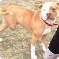 Adopt A Pet :: BOO - Quinlan, TX