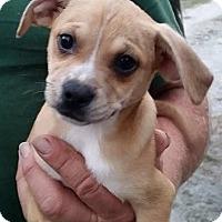 Adopt A Pet :: Sunday - Gainesville, FL