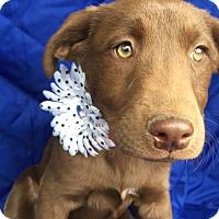 Adopt A Pet :: alannah Adoption pending - Manchester, CT