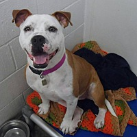 Adopt A Pet :: Emilee - Westminster, MD