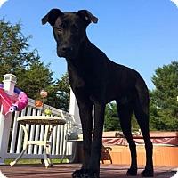 Adopt A Pet :: Zephyr - New Haven, CT