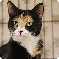 Calico Cat for adoption in Gainesville, Virginia - Liza