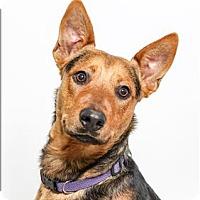 Adopt A Pet :: Princeton - San Luis Obispo, CA