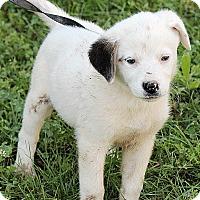 Adopt A Pet :: Mallory - Allentown, PA