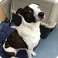 Adopt A Pet :: MILO (Courtesy List) - San Pedro, CA