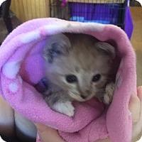 Adopt A Pet :: *GASTON - Sacramento, CA