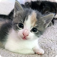 Adopt A Pet :: Fairdale - Mississauga, Ontario, ON