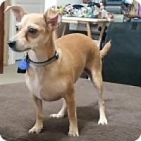 Adopt A Pet :: Dixie - Mesa, AZ