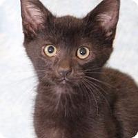 Adopt A Pet :: Yo Yo - Encinitas, CA