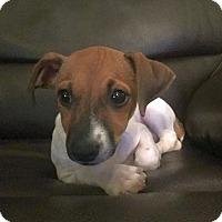 Adopt A Pet :: Web - Homewood, AL