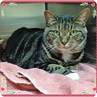 Adopt A Pet :: ALEXANDRIA - Marietta, GA