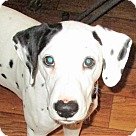 Adopt A Pet :: Chase #2