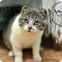 Adopt A Pet :: Molly Mae - Keswick, ON