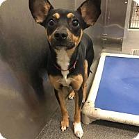 Adopt A Pet :: Seth MacFarlane - Brooklyn, NY