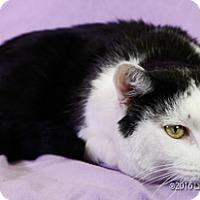 Adopt A Pet :: Nemesia - Las Vegas, NV
