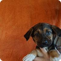 Adopt A Pet :: Summer - Oviedo, FL