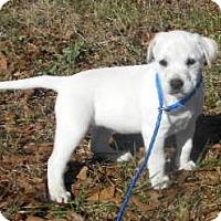 Adopt A Pet :: Sabrina - Allentown, NJ