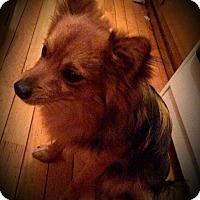 Adopt A Pet :: Sharkie - Sioux Falls, SD