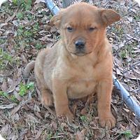 Adopt A Pet :: Ferdinand - Manchester, NH
