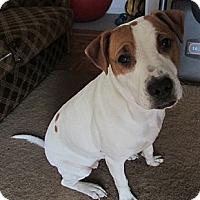 Adopt A Pet :: Blanche - Bardonia, NY