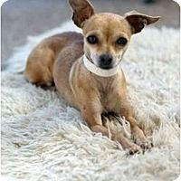 Adopt A Pet :: Maus ( Mouse) - Chimayo, NM