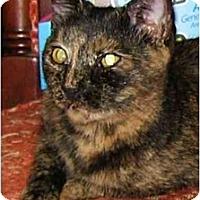 Adopt A Pet :: KITTENJuliet - Plainville, MA