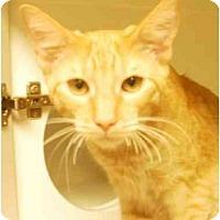 Adopt A Pet :: Frankie - Maywood, NJ