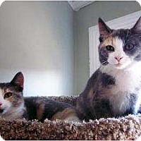 Adopt A Pet :: Sisters Roxanne & Lilly - Chicago, IL