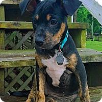 Adopt A Pet :: Lonnie - Homewood, AL