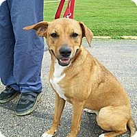 Adopt A Pet :: Tami - Lancaster, OH