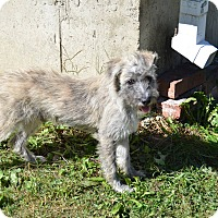 Adopt A Pet :: Mason - Perris, CA