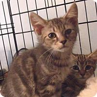 Adopt A Pet :: ZANDER - Acme, PA