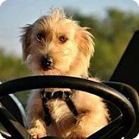 Adopt A Pet :: Addalin - Austin, TX