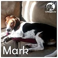 Adopt A Pet :: Mark - Novi, MI