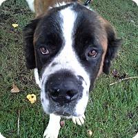 Adopt A Pet :: Batholomew - Bellflower, CA