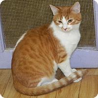 Adopt A Pet :: Tony - Dover, OH