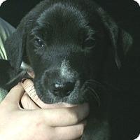 Adopt A Pet :: Patrick#3M - Orlando, FL