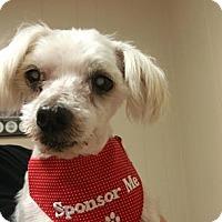 Adopt A Pet :: George - Emory, TX