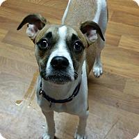 Adopt A Pet :: Kassidy - Lisbon, OH